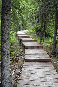 Good Wooden Path With Steps In The Forest Design