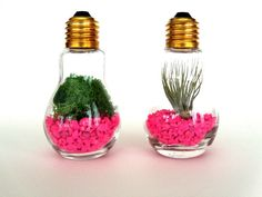 DIY Light Bulb Terrariums Kit - Set of 2