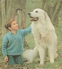 Belle Sebastian Such Wonderful Childhood Memories
