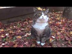 Maru & Hana in Autumn - We Love Cats and Kittens