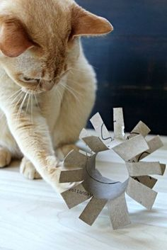 Make cat toys yourself - 65 sparkling ideas and examples - katzenspielzeug - Cats Diy Cat Toys, Homemade Cat Toys, Toys For Cats, Diy Jouet Pour Chat, Cat Whisperer, F2 Savannah Cat, Gatos Cats, Cat Dog, Cat Treats