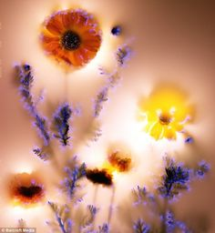 Robert Buelteman's Electrifying Images of Electrocuted Flowers  - Kirlian-photography-4