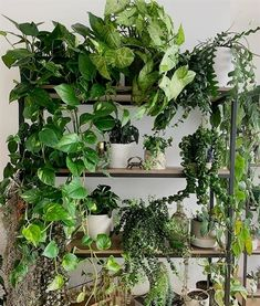 42 lovely indoor plant ideas green apartment, indoor plants, indoor garden, plants are Plants For Hanging Baskets, Room With Plants, House Plants Decor, Plant Decor, Jade Plants, Bamboo Plants, Indoor Plants, Silk Plants, Foliage Plants