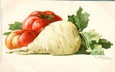 Turnip and Tomatoes