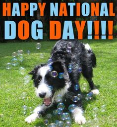 Happy National Dog Day #Win a $30 Petco Gift Card OR Paypal Cash for a Happy National Dog Day! – ends 9/4 Open WW