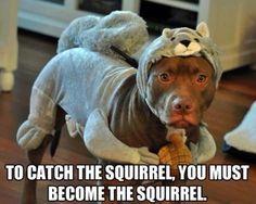 Animal Funny Memes