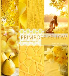 Модный цвет PANTONE 2017 - 13-0755 Primrose Yellow / Желтая Примула, сезон лето-весна 2017