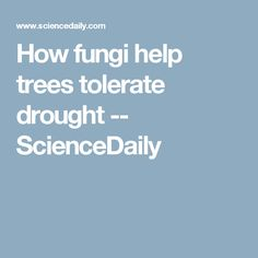 How fungi help trees tolerate drought -- ScienceDaily