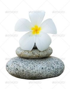 isolated frangipani with with stack of rocks ...  ancient, apacheta, balance, buddhism, calm, chedi, clipping, close-up, details, eastern, exotic, flower, frangipani, garden, isolated, japanese, life, macro, meditation, mind, natural, nature, path, pebble, pink, plumeria, relax, rock, round, simple, simplicity, soul, spirit, spirituality, stack, still, stone, tradition, traditional, tropical, white, zen