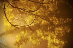 Spiderweb 2 by smashhaagb  Flickr - Photo Sharing!
