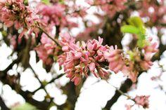 El color de la primavera. by Raúl Soriano Meseguer, via Flickr