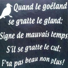 #quand le goéland se #gratte le #gland : #igne de #mauvais #temps , s'il se gratte le #cul : il fera pas #beau non #plus !