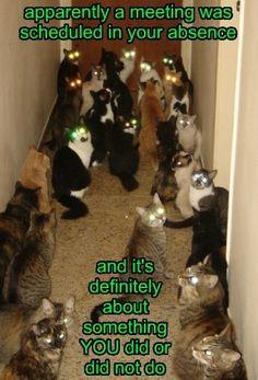 Crazy Cat Lady Nightmare