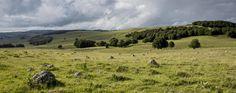 Plateau de l'Aubrac, Aveyron © P. Soissons - Tourisme Aveyron