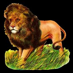 Vintage Image of a male Lion. png