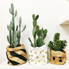Washable Paper Bags Perfect for cactus planters and all of your storage needs #jumbledonline #coolstorage #washablepaperbags