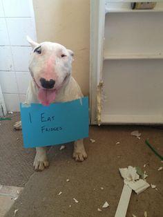 dog shaming - I eat fridges