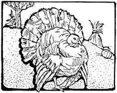 34 Best turkey images   Turkey, Turkey drawing, Turkey ...
