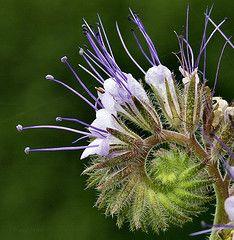 Fab flower