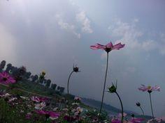 冬日之花…