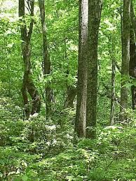 Image result for north american forest