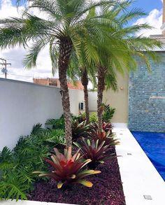 Florida Landscaping, Beach Gardens, Tropical Garden, Garden Design, Beautiful Pictures, Backyard, Landscape, Plants, Inspiration