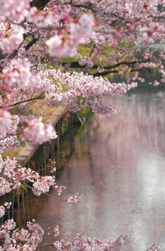 Reflections in pink