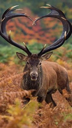 Animal Magic, Animal 2, Mundo Animal, Jungle Animals, Baby Animals, Cute Animals, Wild Animals, Elk Pictures, Animal Pictures