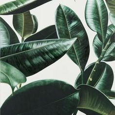 Foliage is a obvious recall of tropical plants for the Molteni&C Materia collection. Leave In, Plants Are Friends, Green Plants, Belle Photo, Indoor Plants, House Plants, Planting Flowers, Greenery, Plant Leaves