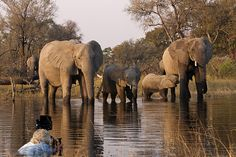 INTERVIEW: Dereck and Beverly Joubert on Wildlife Conservation in Botswana & their new documentary, Soul of the Elephant. Beautiful Places To Travel, Beautiful World, Herd Of Elephants, National Geographic Photographers, Wildlife Conservation, Animals Of The World, Filmmaking, Explore, Nature