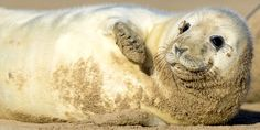 Stop The UK Seal Slaughter