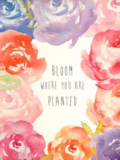 Bloom where you are planted... 8x10 print! Peonies!