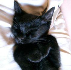 cutest ever cat nap picture <3                                                          #black cat  #cat nap