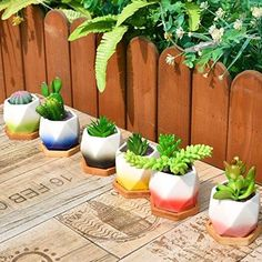 When we start planting seeds together you discover the value that you create from the Plant, we assume it is a GIFT for everyone. Small Succulents, Succulent Pots, Planter Pots, Green Plants, Cactus Plants, Cacti, Cactus Seeds, Love Garden, Pot Sets