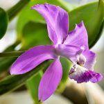 Cum să faci ULEI de ALOE VERA în casă (+ utilizări) | La Taifas Aloe Vera, Omega, Plants, Plant, Planets