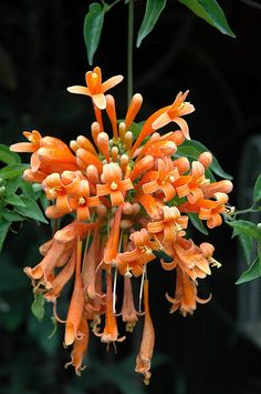 Flower in Antigua, Guatemala -- Colour // Inspiration // Fashion // Pantone // Spring // 2015 // Tangerine