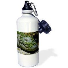 3dRose Alligator, Sports Water Bottle, 21oz