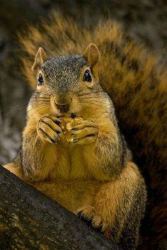 Walnuts...