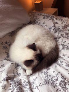 Tired kitty http://ift.tt/2v2ivr4