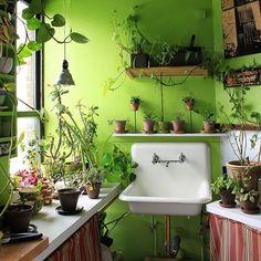 I'm so happy that last week, I got to meet Summer @homesteadbrooklyn and (briefly) visit her amazing plant-filled apartment. The jungle vibes made me feel right at home - plant nerds unite! ~ ~ #houseplants #plantlove #foliage #indoorplants #plantlife #urbanjunglebloggers #plantsmakepeoplehappy #plantstagram #botanical #botany #greenery #greenthumb #jungalowstyle #plantparenthood #houseplantjournal #plants #gardening #Regram via @houseplantjournal