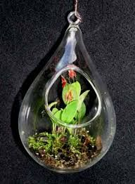 Image result for mini orchid in terrarium