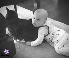 Saying Goodbye to Our Fur Baby  :: Detroit Moms Blog ::