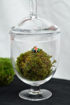Apothecary jar terrarium with moss ball and little people