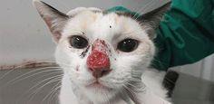 Micose que provoca morte de gatos atinge humanos
