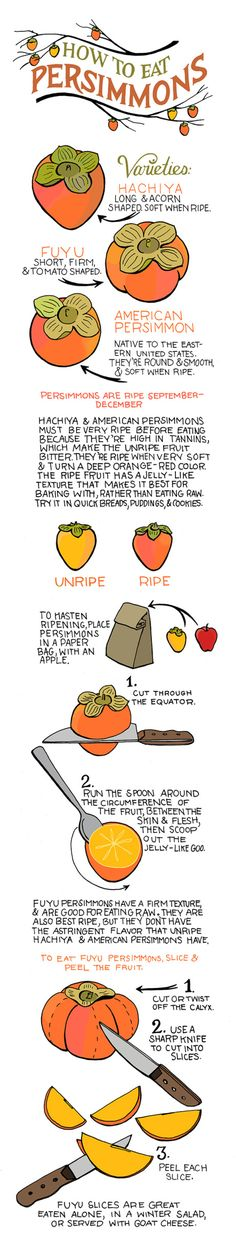 Persimmon Guide | Illustrated Bites