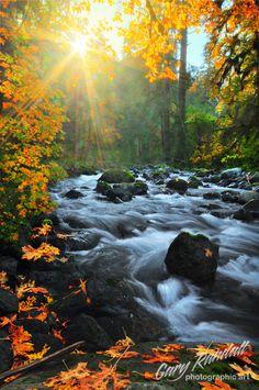 Quinault River on the Olympic Peninsula of Washington   Gary Randall