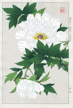 """Peony"" by Shodo Kawarazaki, Japanese Woodblock Botanicals, Shin Hanga Japan Illustration, Illustration Blume, Art Floral, Asian Artwork, Art Asiatique, Japanese Flowers, Japanese Love, Art Japonais, Japanese Painting"