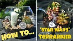 How to.. make a STAR WARS Terrarium    #starwars #terrarium