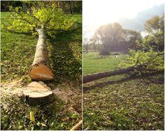 Baum fällt !