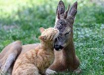cat and baby deer!